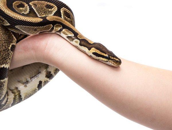 miedo-serpientes